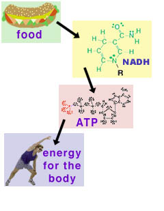 Food-energy-NADH