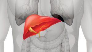 NAD Prevents Liver Damage