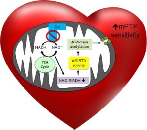 NAD and heart Disease