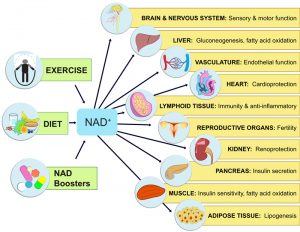 NAD Prevents Brain and Organ Damage
