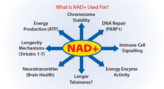 uses of NAD